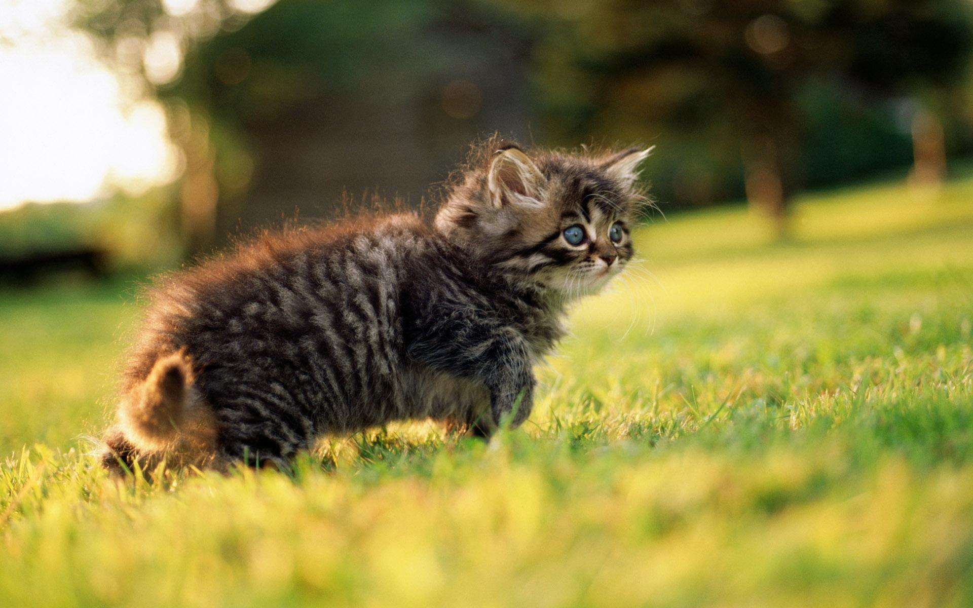 природа животное котенок кот  № 1981167  скачать