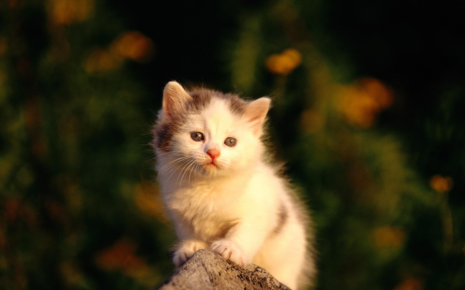 Кот на камушках  № 530532 бесплатно