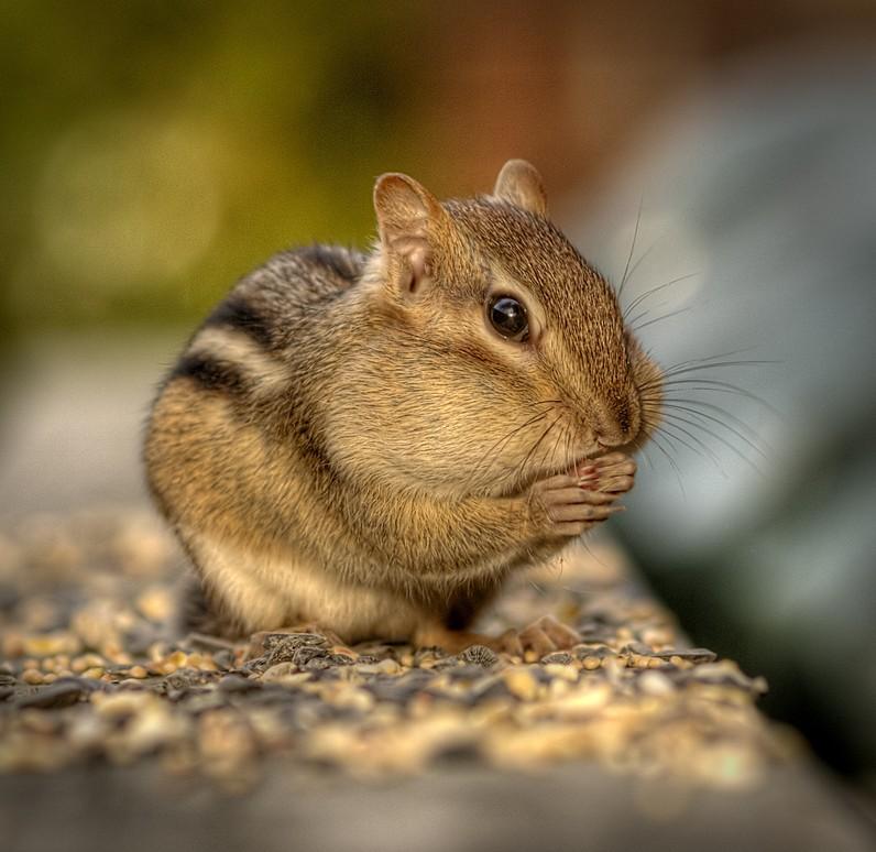 https://www.basik.ru/images/cute_animals_2452/17_cute.jpg