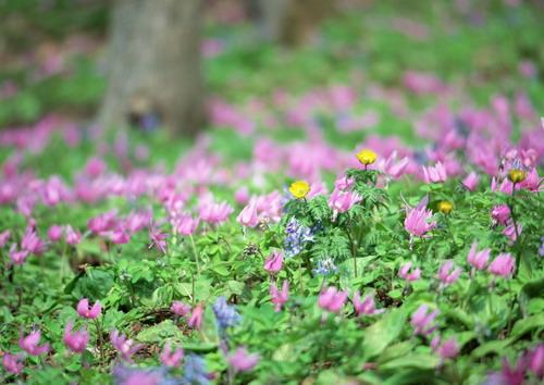 Полевые цветы фото 14