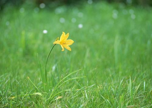 Полевые цветы фото 38