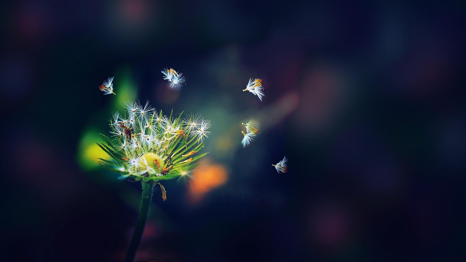 Схемы посадки цветника с тюльпанами фото или Как красиво